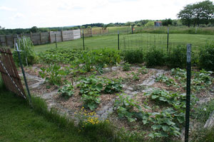 Vegetable garden in June.